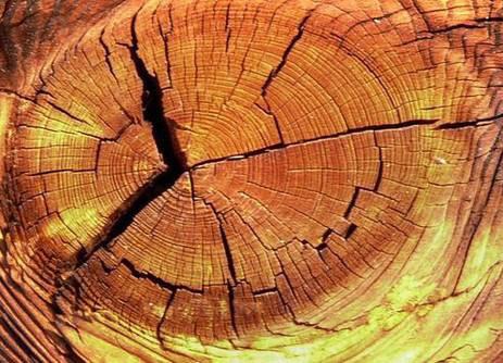 可以用环氧树脂胶填木材上的裂纹、毛刺或脱皮吗?